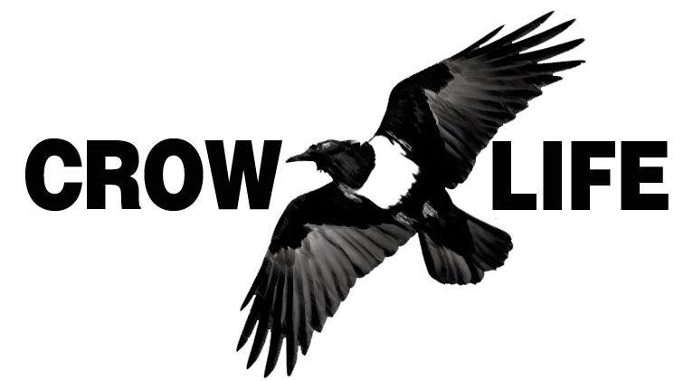 Crow Life – Centre de Recherche et Protection des Corvidés